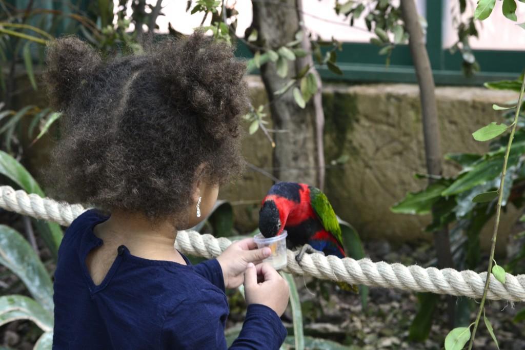 Jasmine feeding the birds at the Jerusalem Biblical Zoo