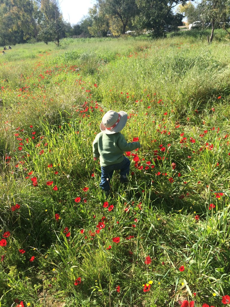 Matan running through the fields at Darom Adom, And she's off!  Grace running near kibbutz Be'eri